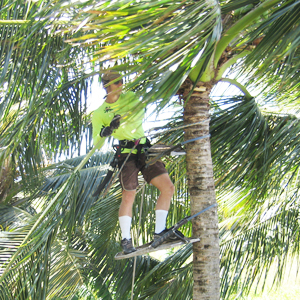 Maui Spikeless Palm Trimming 187 Why Choose Spikeless